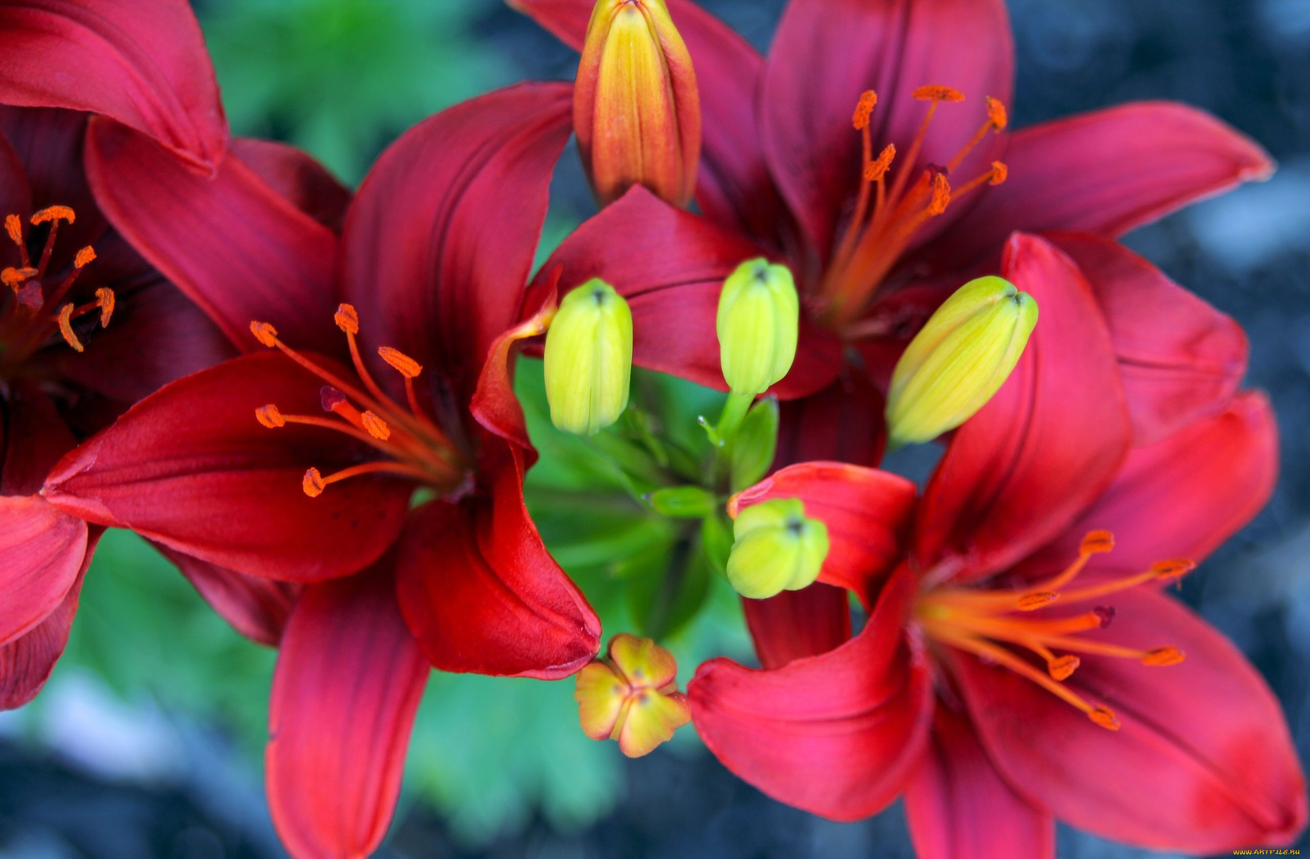hd-flower-images