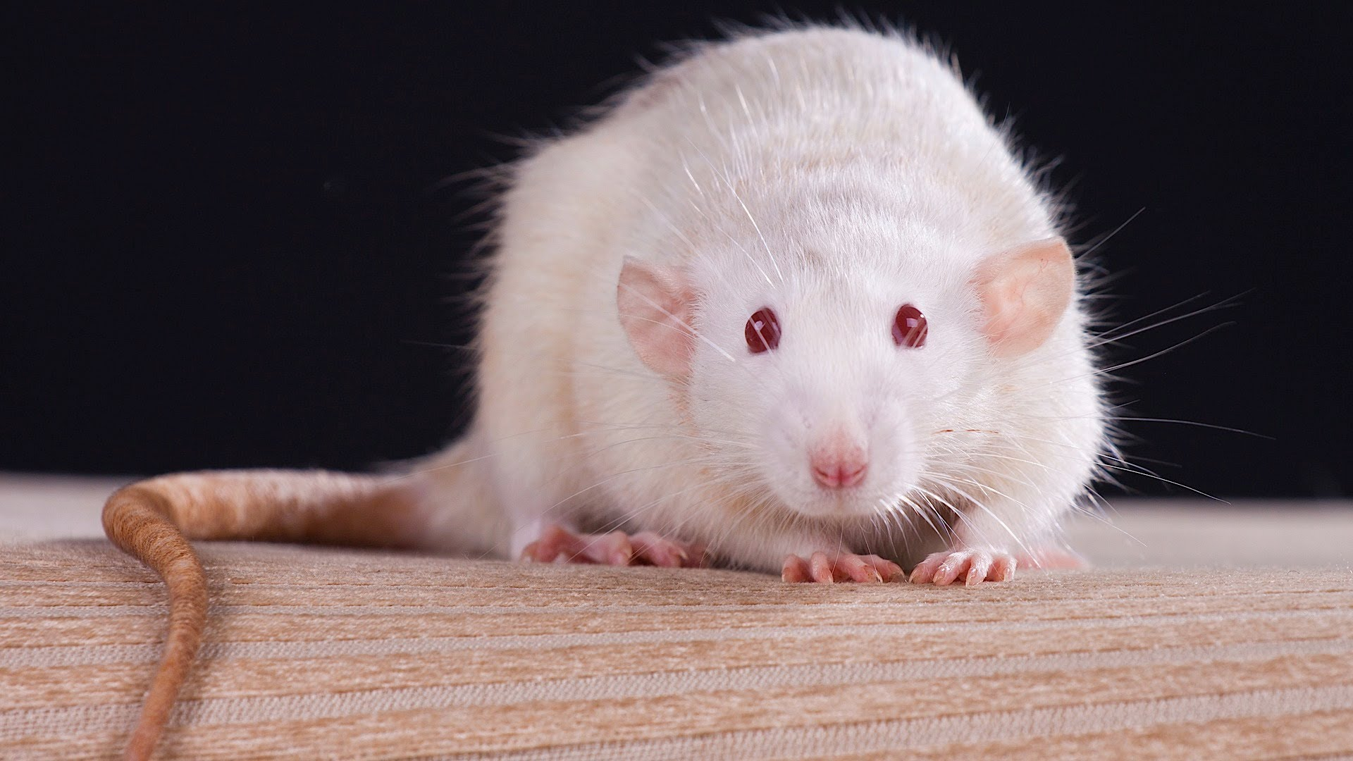 Top 10 small Pets