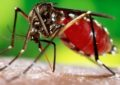 Top 10 Most Effective Tips To Prevent Dengue