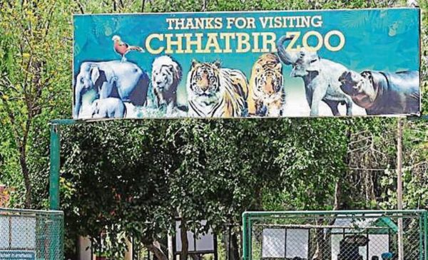 ChattBir Zoo