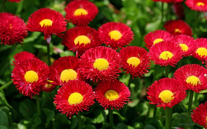 Top 10 Most Amazing HD Flowers Images in the World
