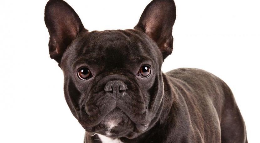 Top 10 Endearing Dog Taxa For Kids & Families