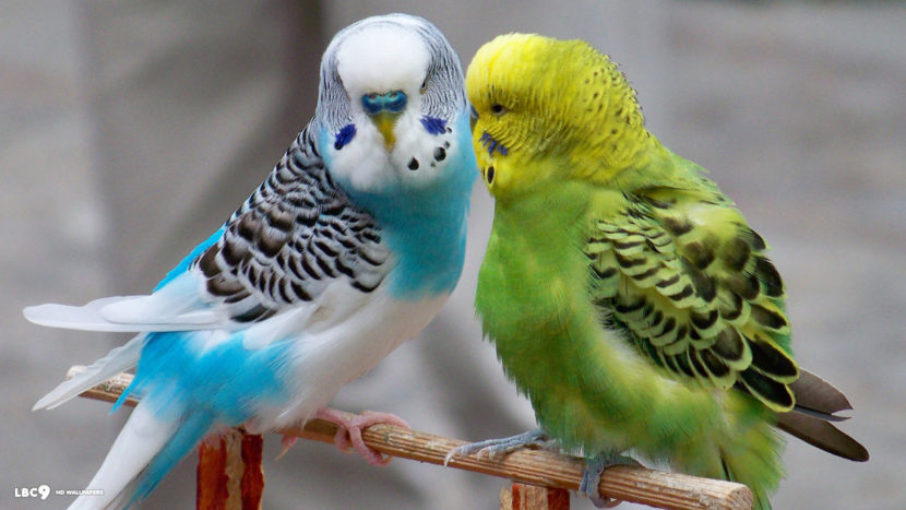 List of Top 10 Bird Pets That Can Be Kept At House And Add Charm