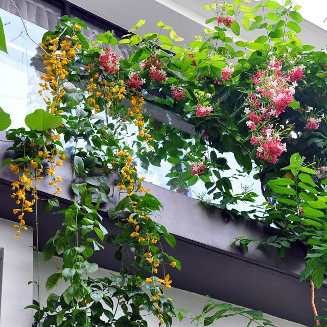 Top 10 Most Beautiful Climbing Plants For Your Balconies